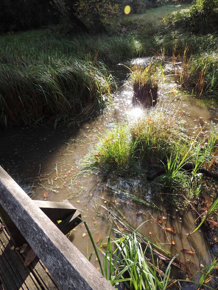 Ditch Restoration with the Environment Trust
