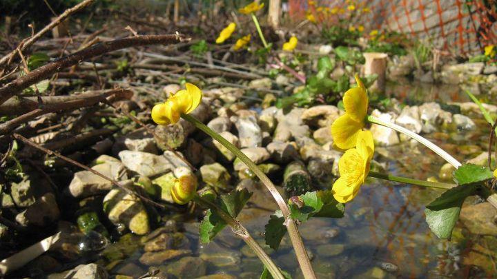 Biodiversity: Pond Maintenance