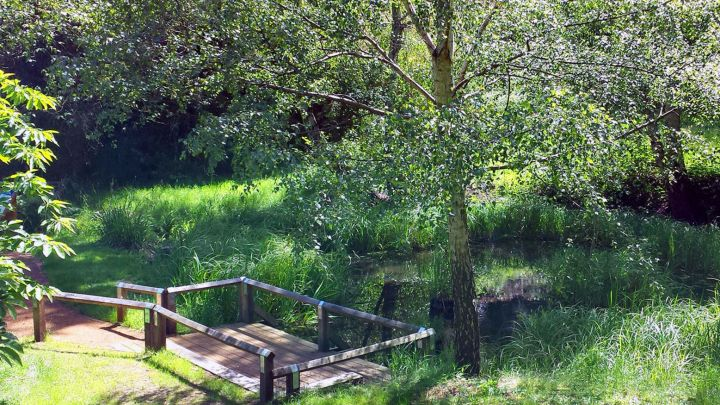 Biodiversity: Pond Maintenance