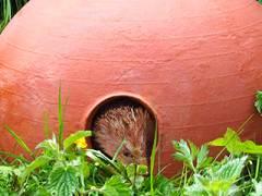 Kingston University design graduate embarks on mission to halt decline of the humble hedgehog