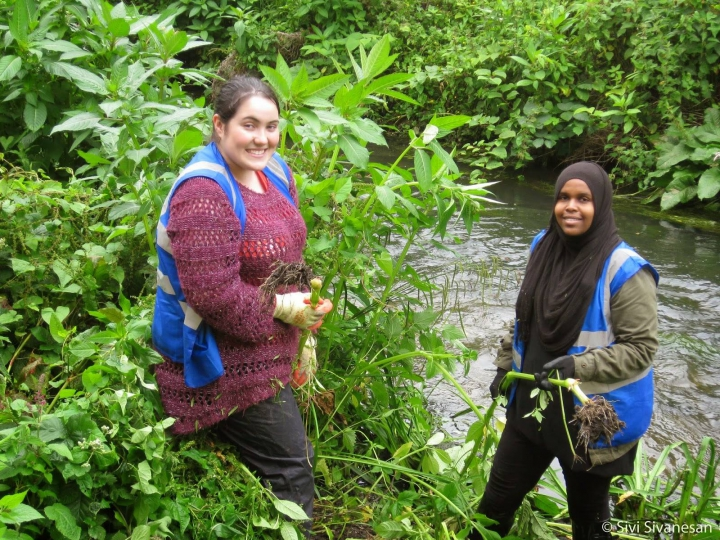 Hogsmill River clean up