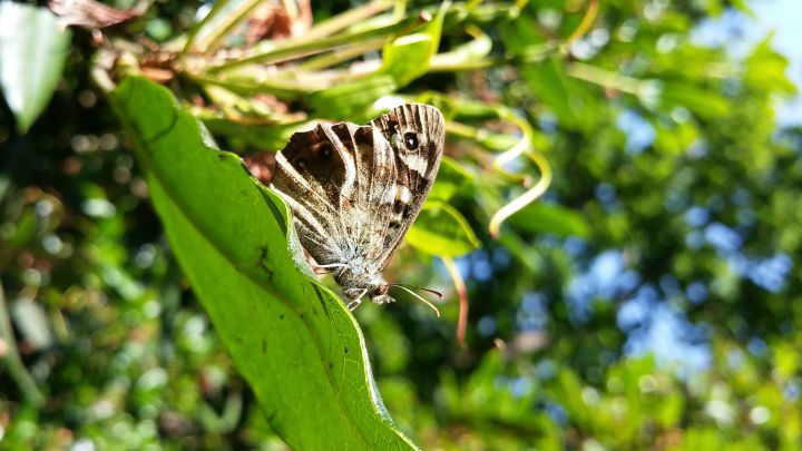 Big Butterfly Count 2016