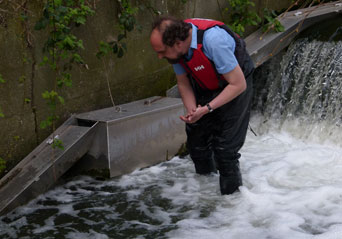 ZSL's Joe Pecorelli checks the eel trap at the Hogsmill River which runs through the Knights Park Campus.