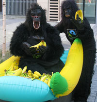 Gorillas give out fruit for the record attempt.