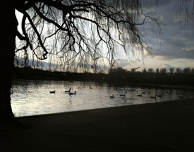 Walks around Bushey Park