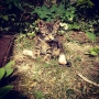 Kitten - Kingston University London