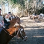 Horse Riding in Cusco - Kingston University London